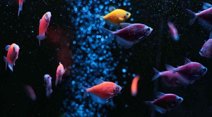 Ribice za akvarijum